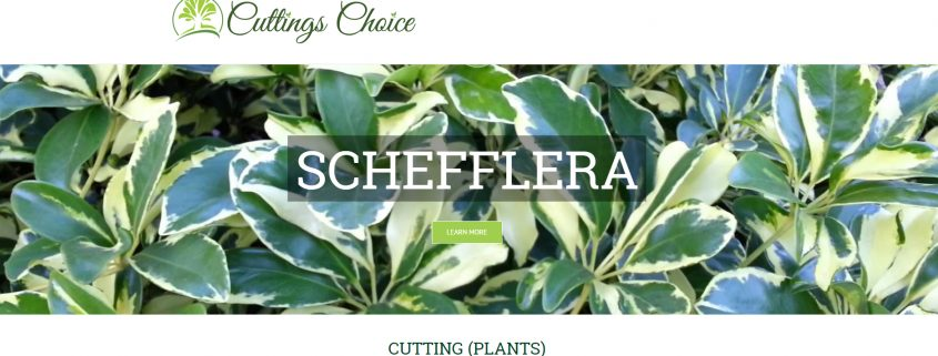 Cuttings Choice